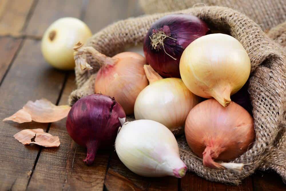 Zwiebeln lagern: Alles was Du wissen musst