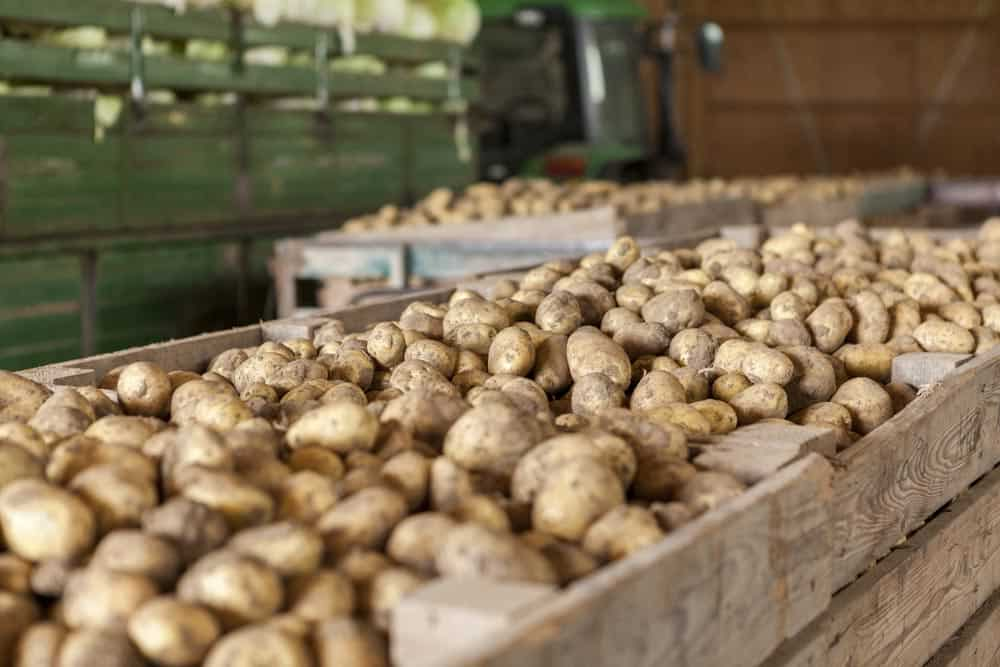 Kartoffeln lagern: Das musst Du wissen